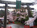 20100424sakura-01.jpg